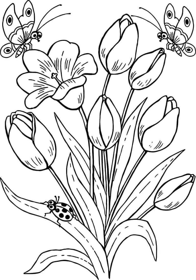 Раскраска тюльпаны и бабочки