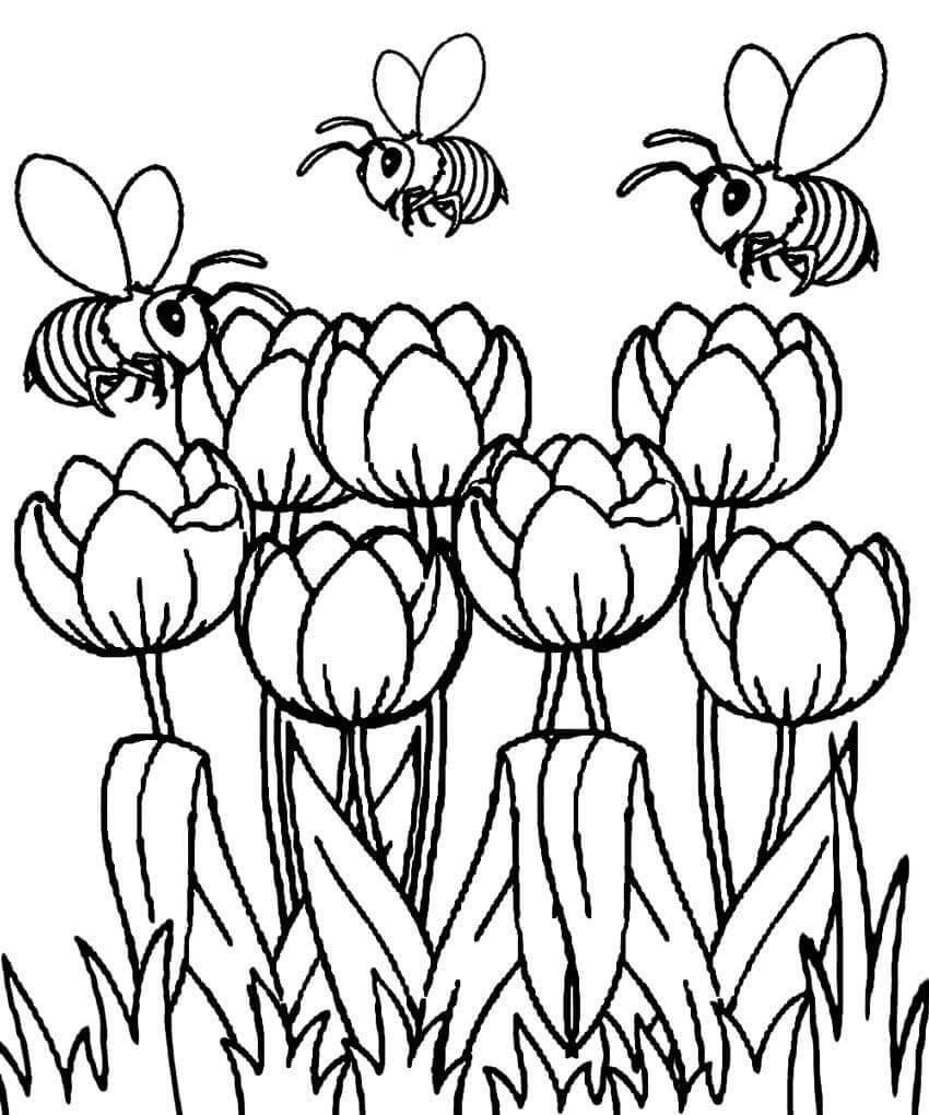 Раскраска тюльпаны и пчелы