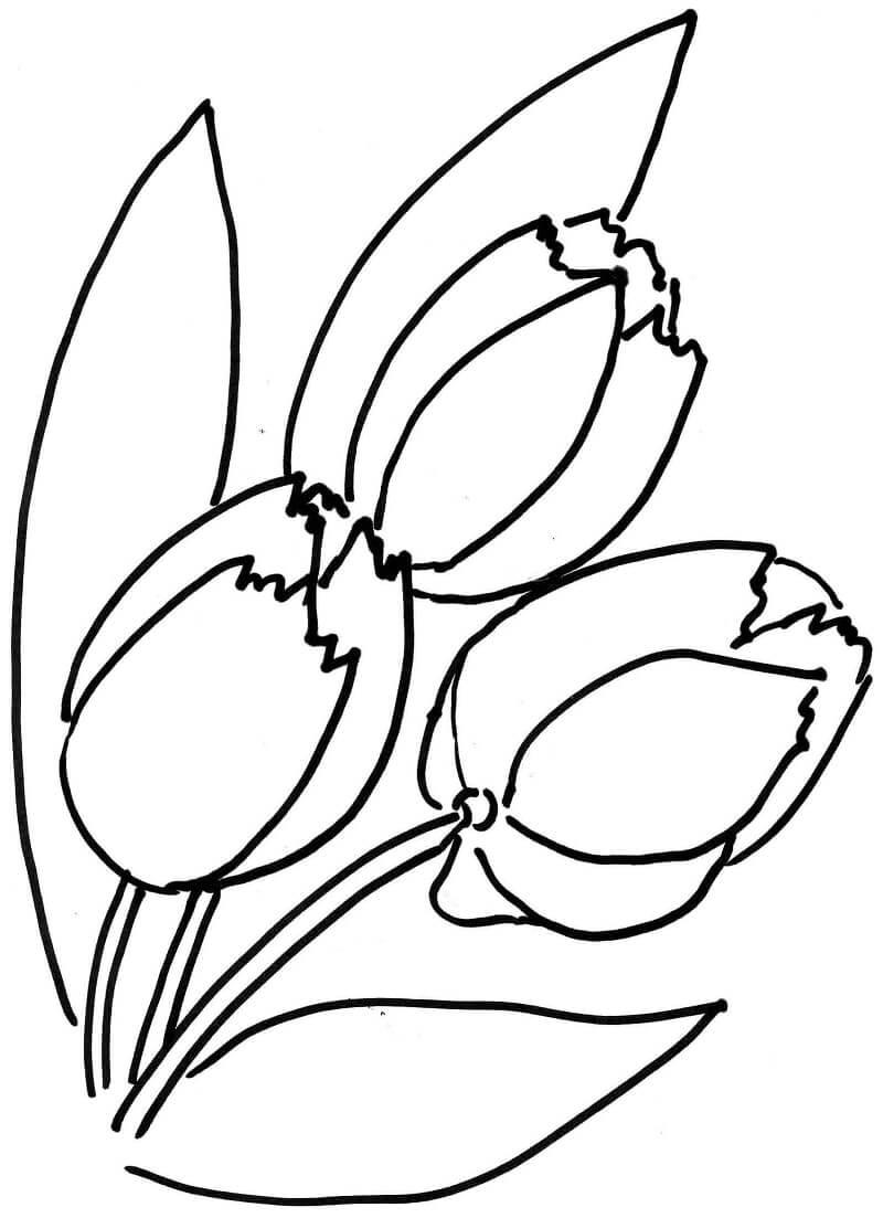 Раскраска тюльпаны цветы