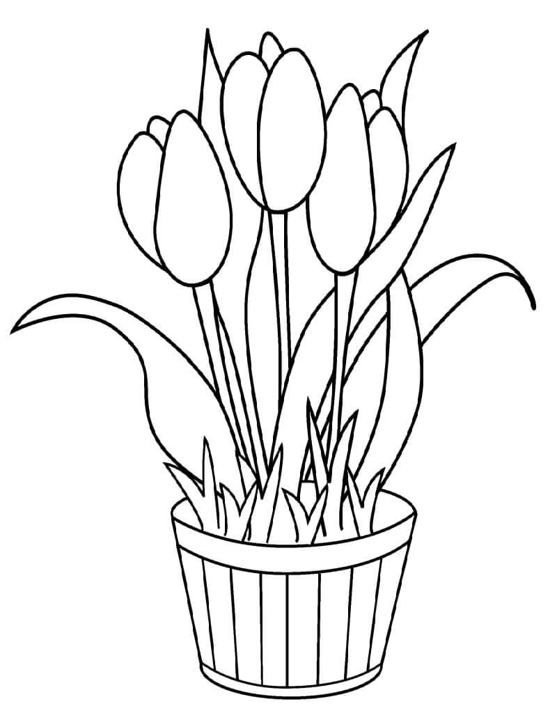 Раскраска Тюльпаны в Горшке