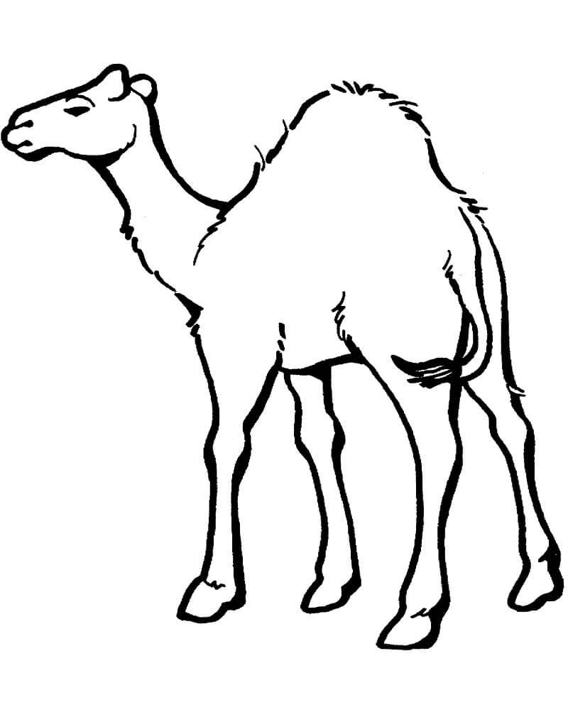 Раскраска Раскраски верблюд