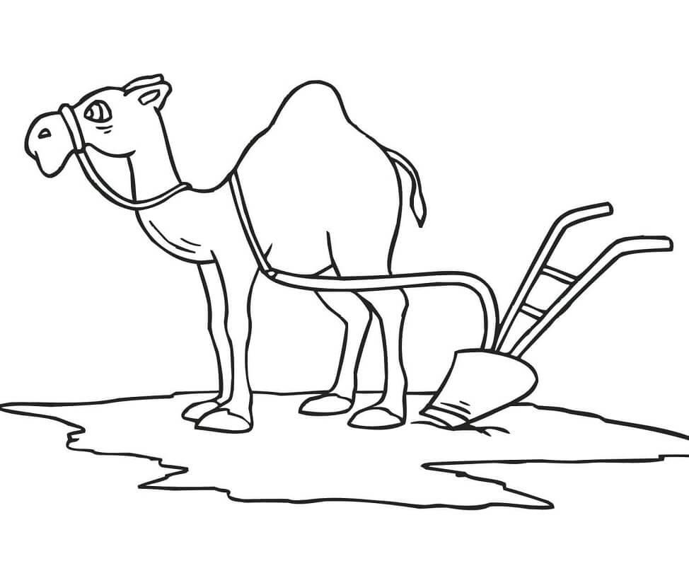 Раскраска верблюд 9