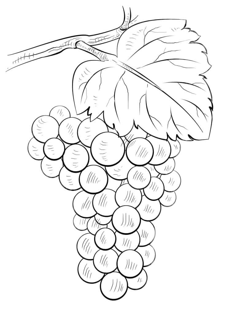 Раскраска виноград 4