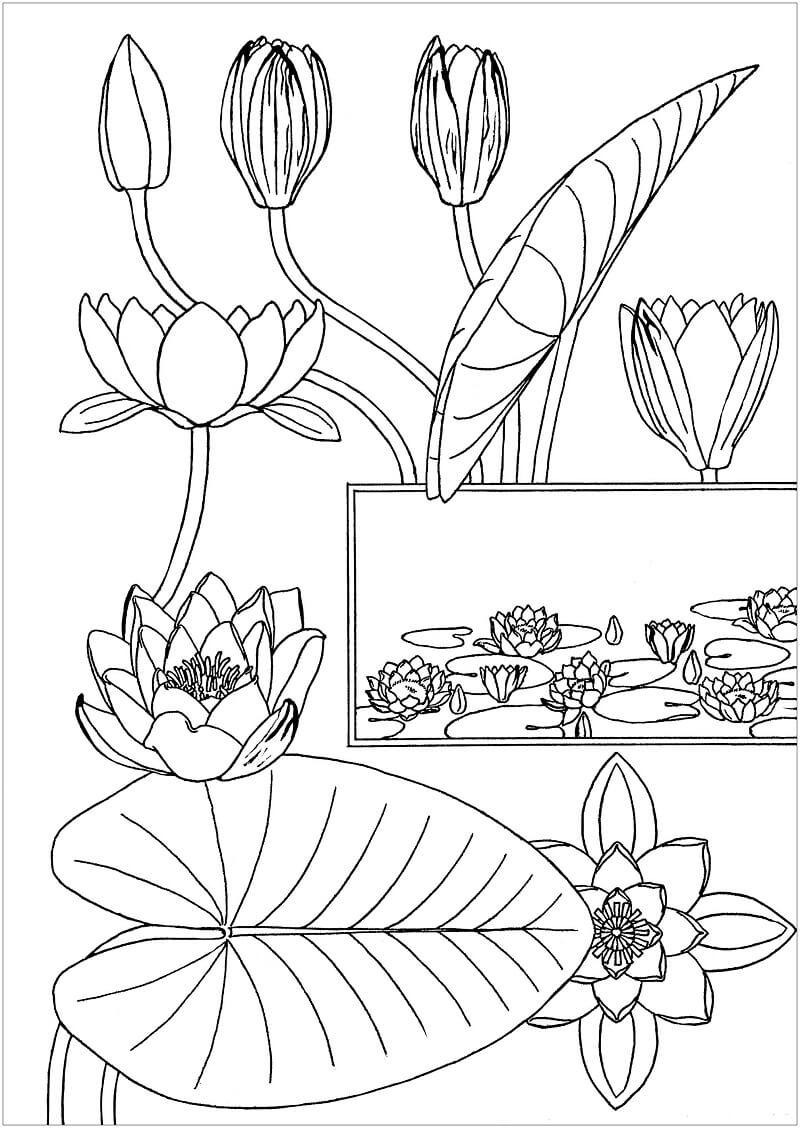 Раскраска водяная лилия 1