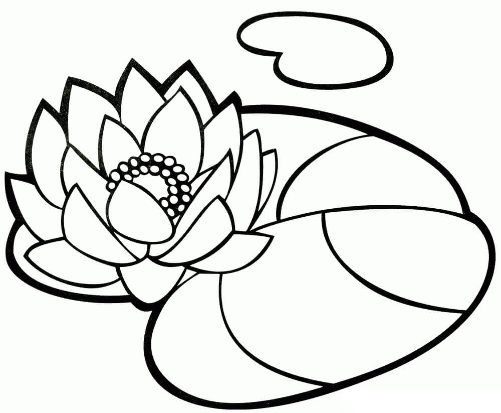 Раскраска Раскраски Водяная лилия