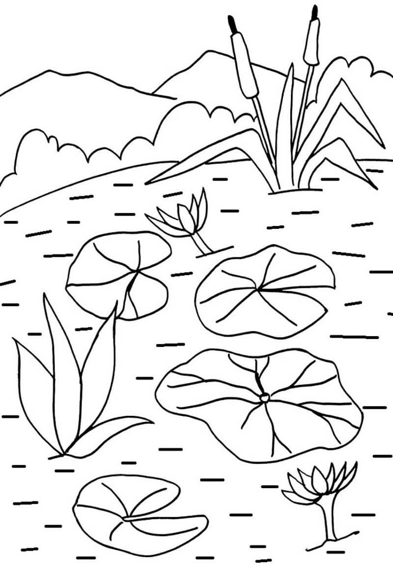 Раскраска водяная лилия