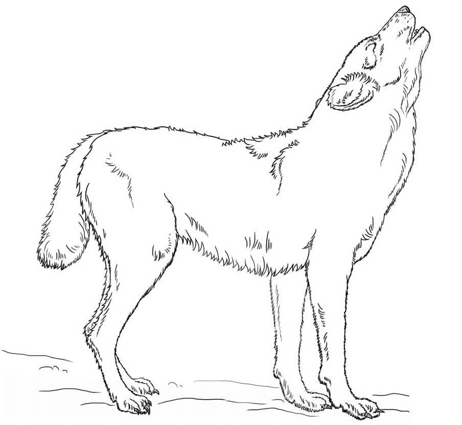 Раскраска Воющий волк 2