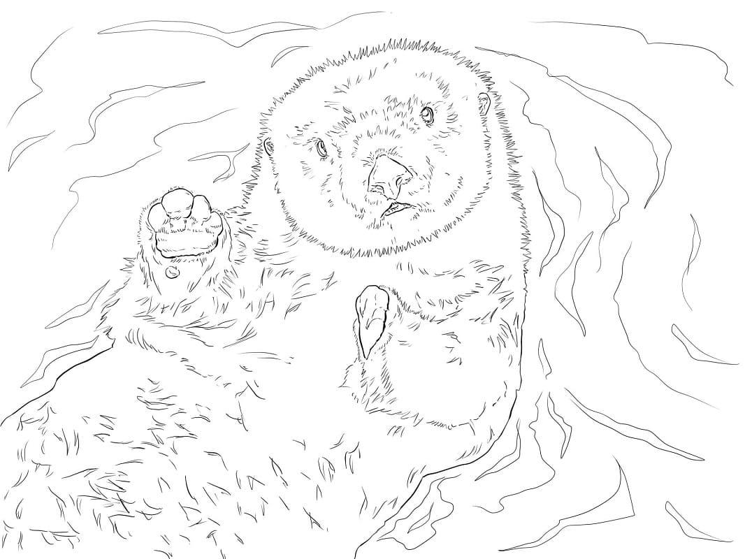 Раскраска Выдра плавание 1