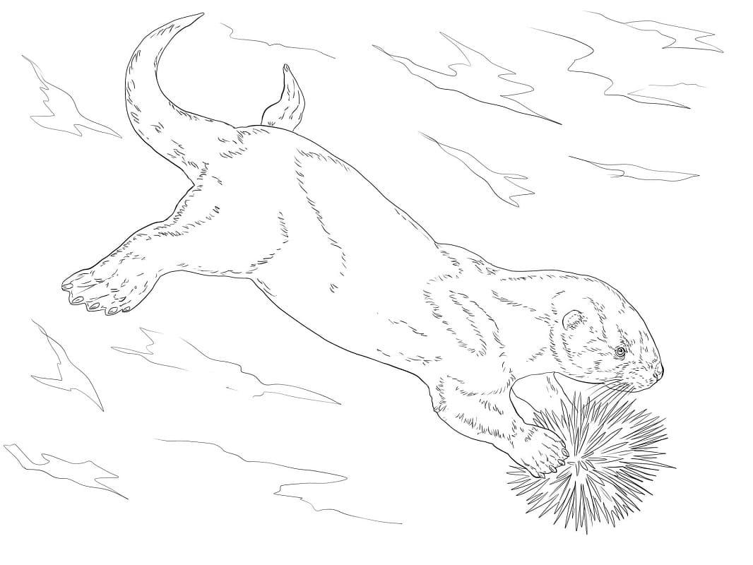 Раскраска Выдра плавание 2