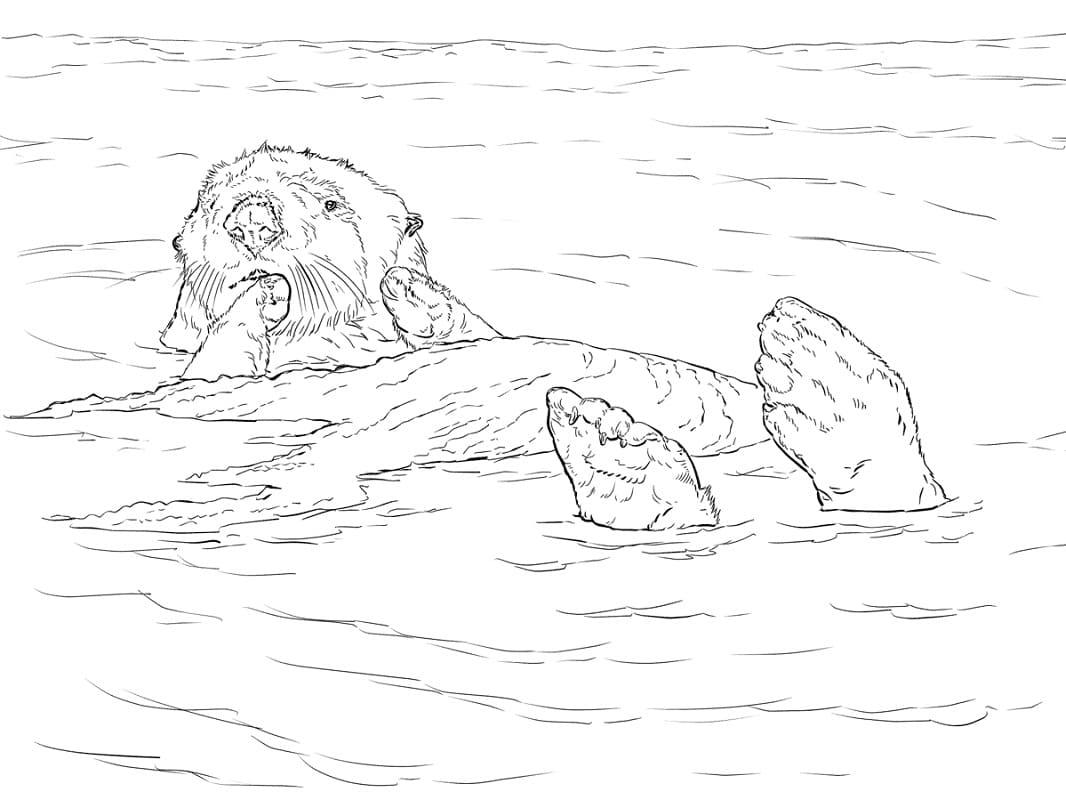 Раскраска Выдра плавание