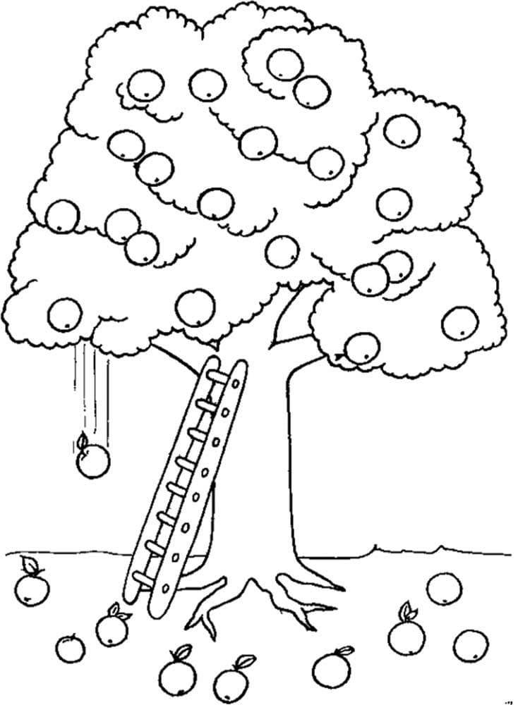 Раскраска яблоня 3