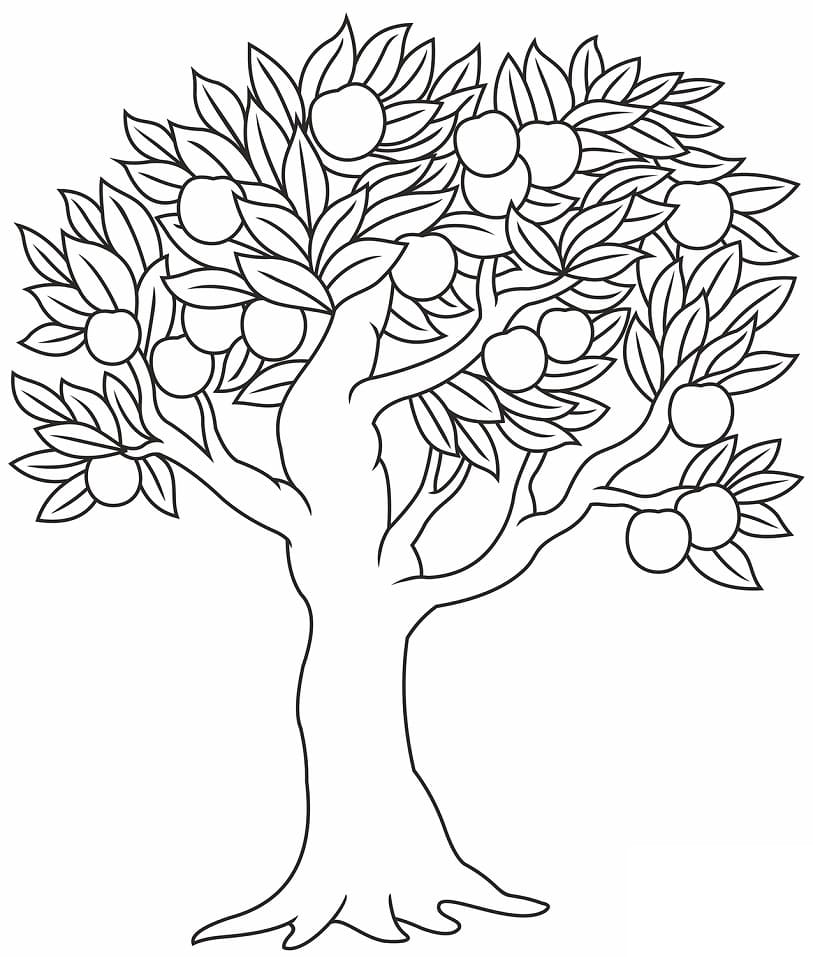 Раскраска яблоня 8
