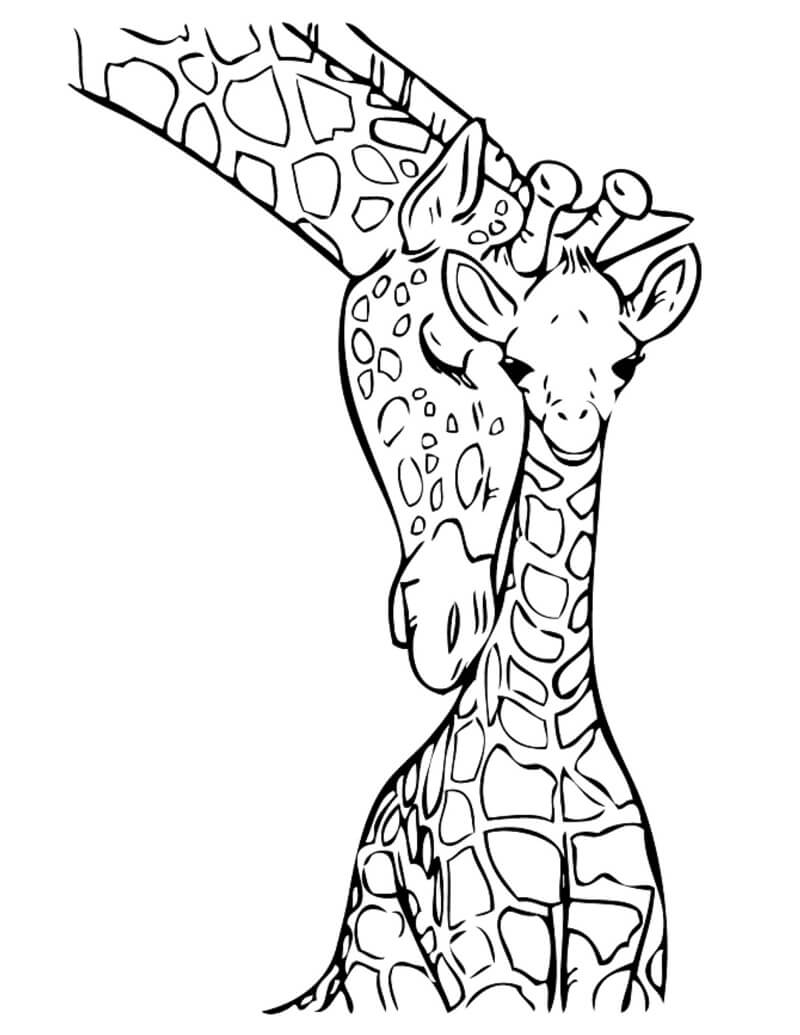 Раскраска жирафы 1