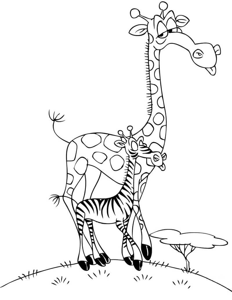 Раскраска жирафы