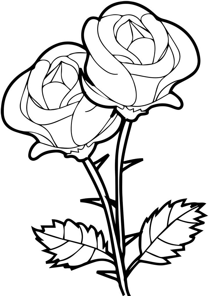 Раскраска Розы