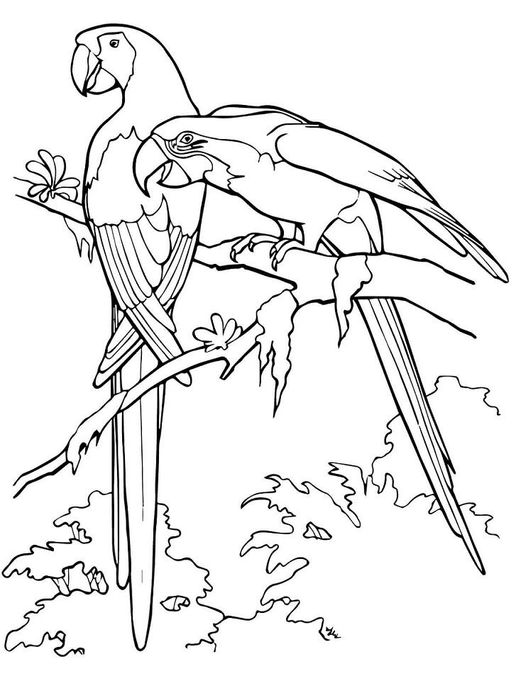 Раскраска Раскраски птицы