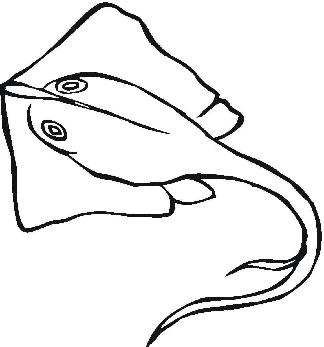 Раскраска Орляковидные