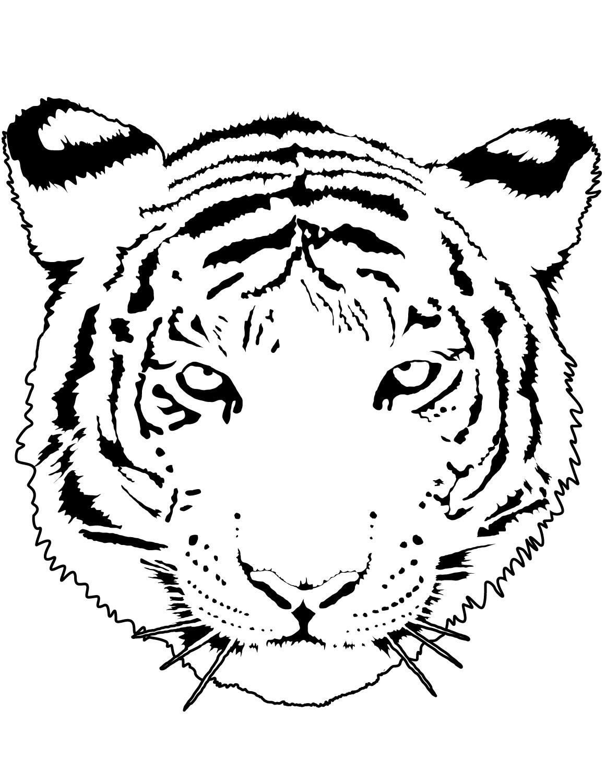 Раскраска Портрет тигра