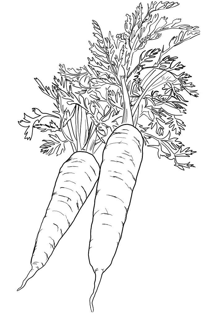 Раскраска Две морковки