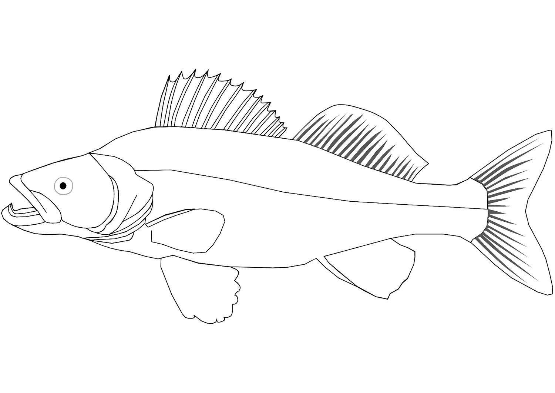 Раскраска Светлопёрый судак