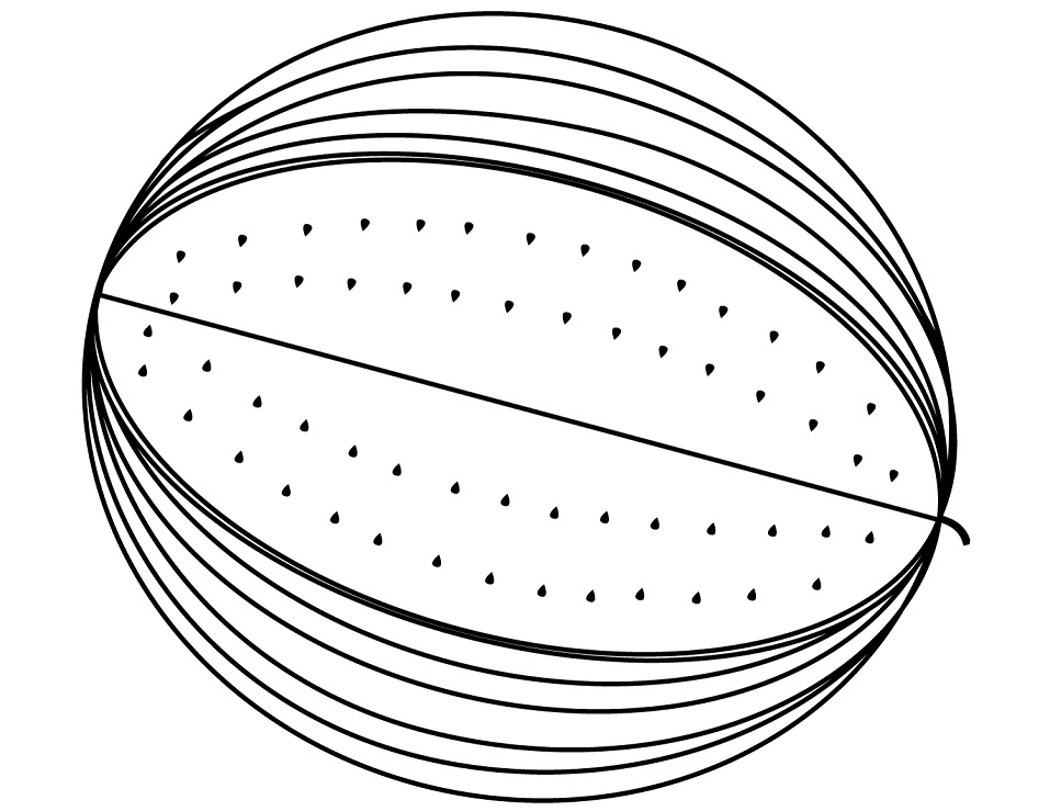 Раскраска Арбуз 2